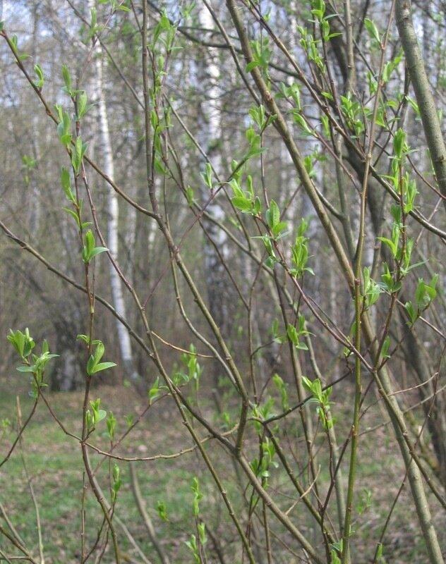 Весна в Тропарево