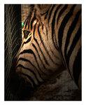 Из Зоопарка