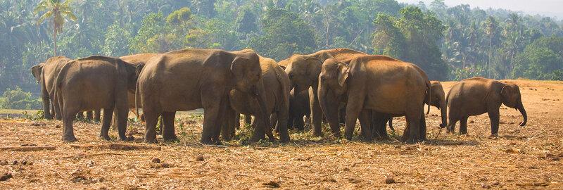 Пейзаж со слониками.