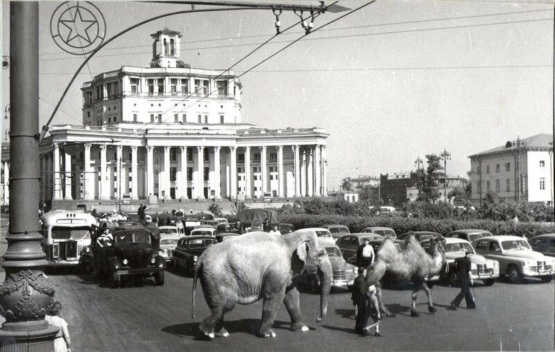21457 Карел Створа, его сын Анатолий, слониха Пунчи и верблюд Рачо архив П. Створы 1954.jpg