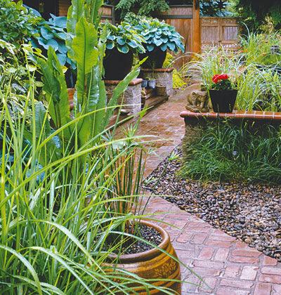 Дизайн двора и сада растения цветы в