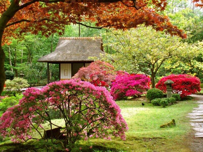 В гааге японский сад клингендаль