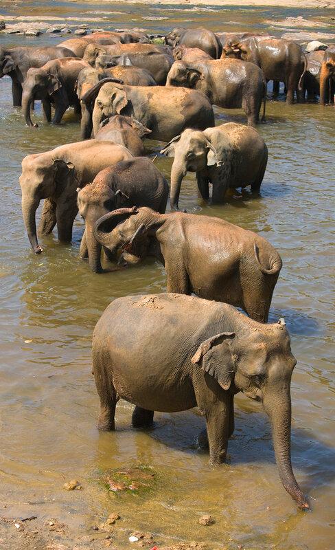 Многосложная композиция слонов.
