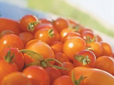 Рекордный урожай помидоровxкак собрать рекордный большой огромный урожай томатов помидоровx