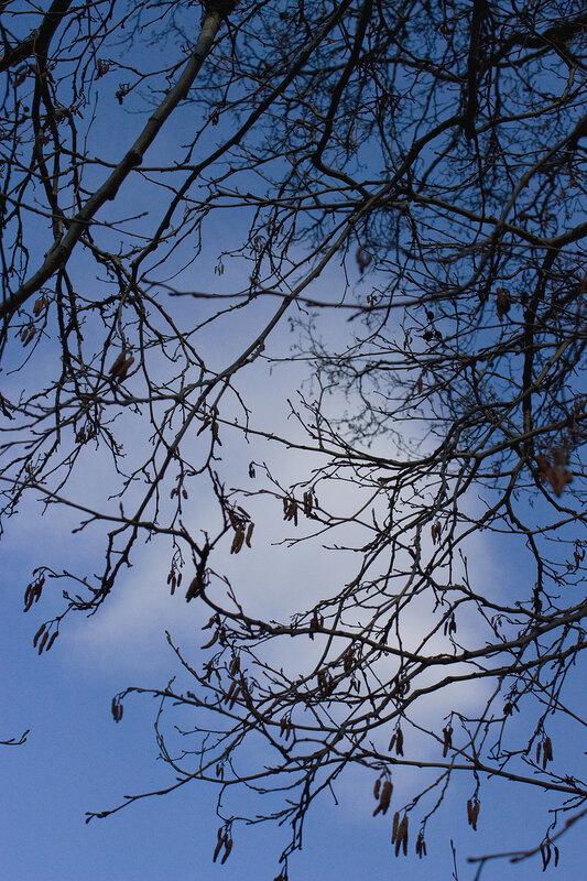 Весеннее небо и ветви