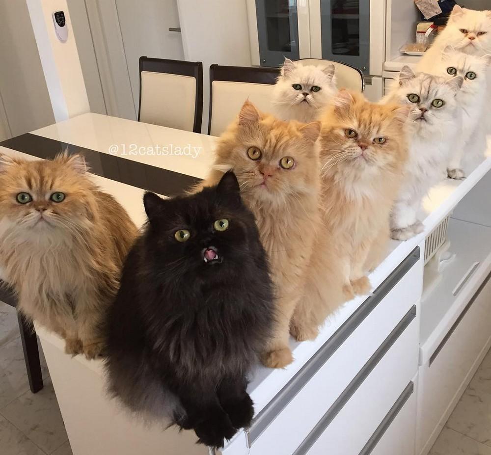 Мама 12-ти кошек на полную ставку