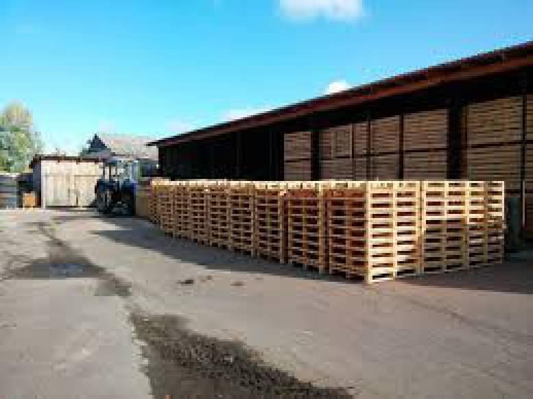 Ущерб государству от незаконной рубки деревьев при соучастии офицеров Госпогранслужбы составил более 19 млн гривен, - ГПУ