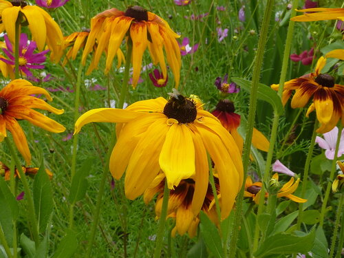 Цветы соседей разошлись, в кудрях и шепоте целуясь, они по вкусу всем пришлись, я красотою их любуюсь!