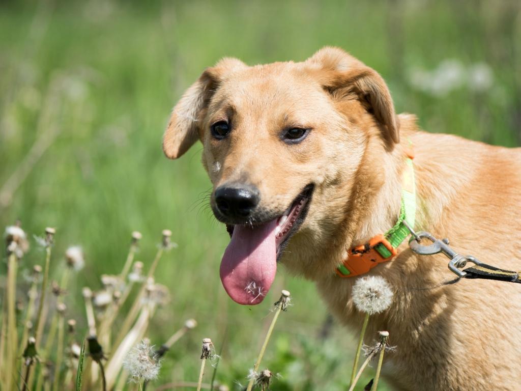 Шайло Нувель собака из приюта догпорт