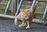 Кот со скоростью света