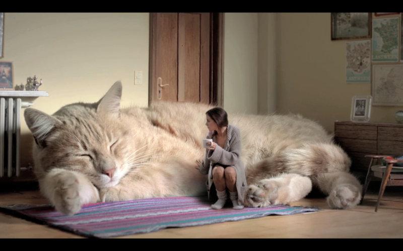 Почему коты любят спать на людях (5 фото)