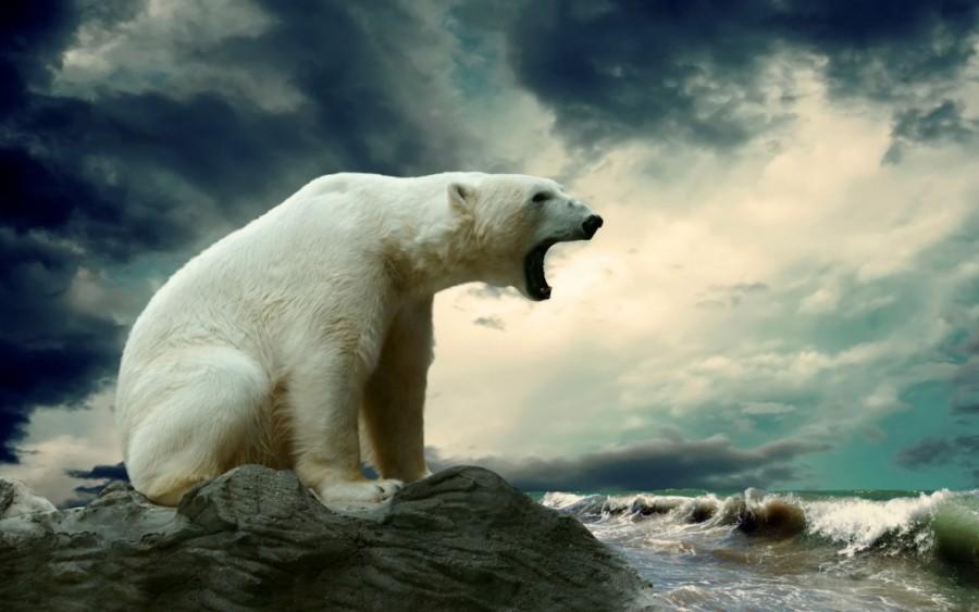 10. В Антарктиде не водятся белые медведи В Антарктиде вы не встретите ни одного белого медведя, так