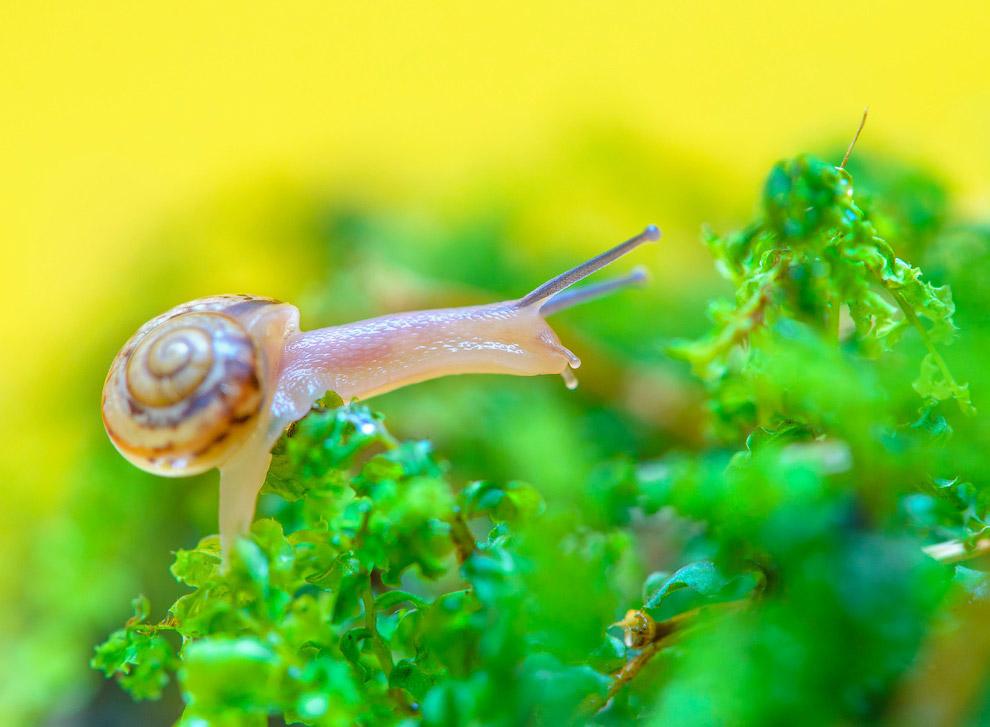 8. Видов улиток очень много. Они — самый многочисленный класс в составе типа Mollusca, который