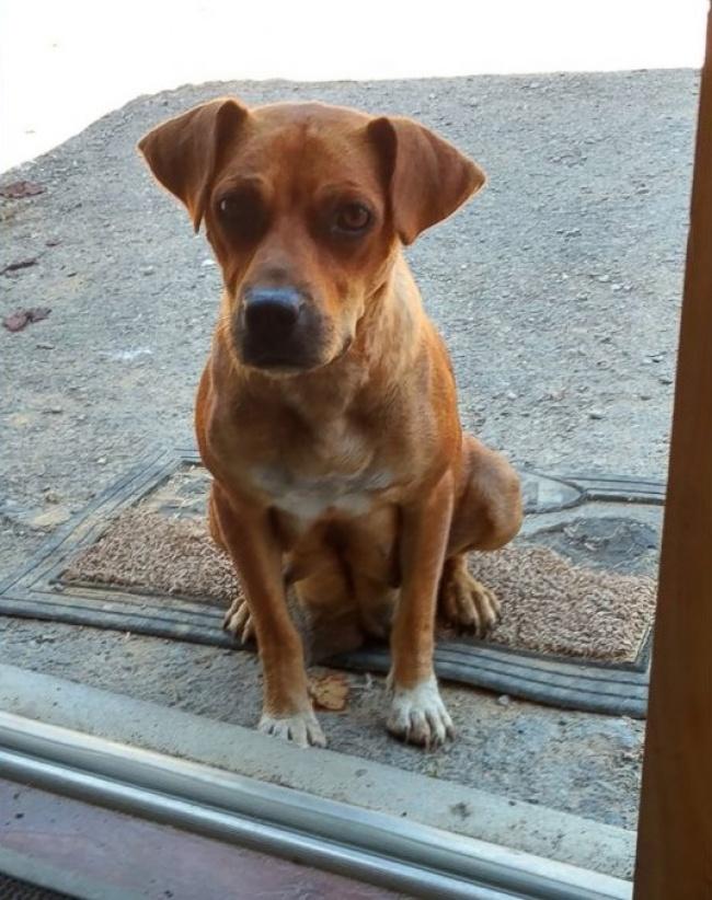 © Trevor Jennings / facebook.com  Собака выглядела изможденной. Мужчины накормили ееидали на