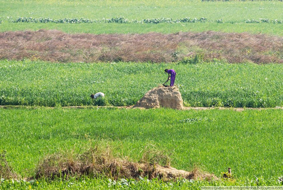 35. Это не мусор, а часть пейзажа. В Индии везде так.