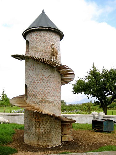 Ферма Бэка находится в Паарле, ЮАР, недалеко от Кейптауна. Что делать, если у вас есть горные козлы,