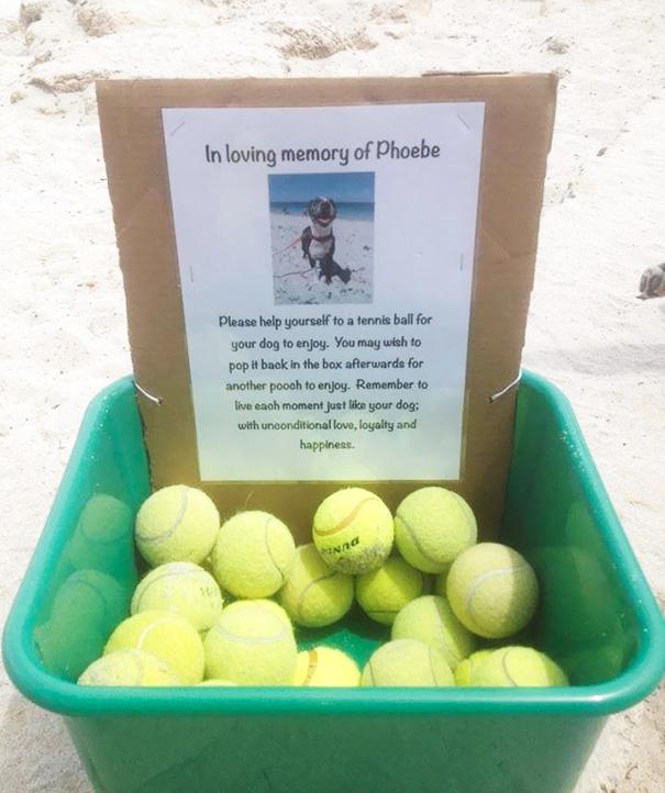 В память о своей умершей собаке хозяин положил теннисные мячики для других собак, чтобы они радовали