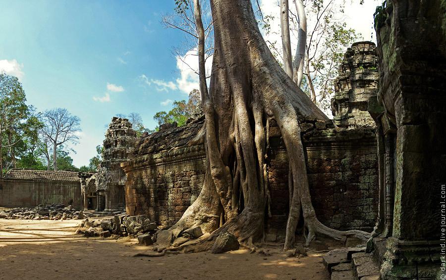 Толстые корни оплетают стену подобно щупальцам осьминога. Ради этих видов туристы стремятся посетить