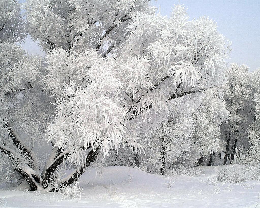 winter_0082.jpg