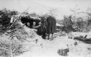 1915. Конюшня, выстроенная на позиции