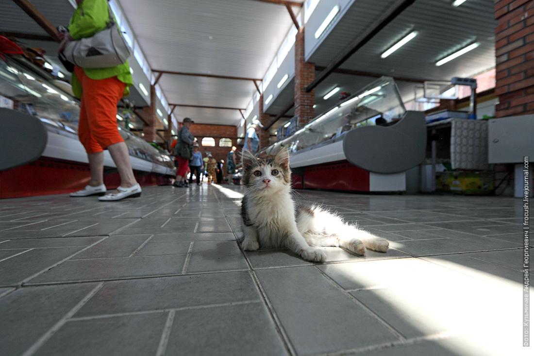 котенок Астраханский рыбный рынок