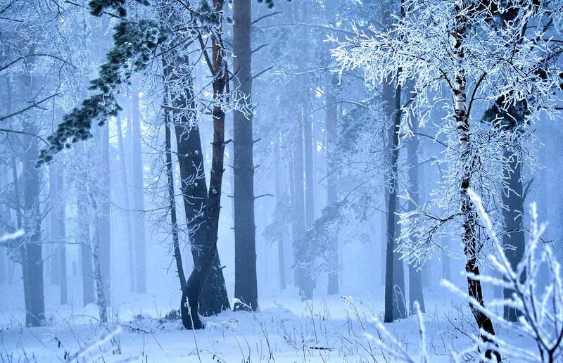 а9 Зимний лес в тумане