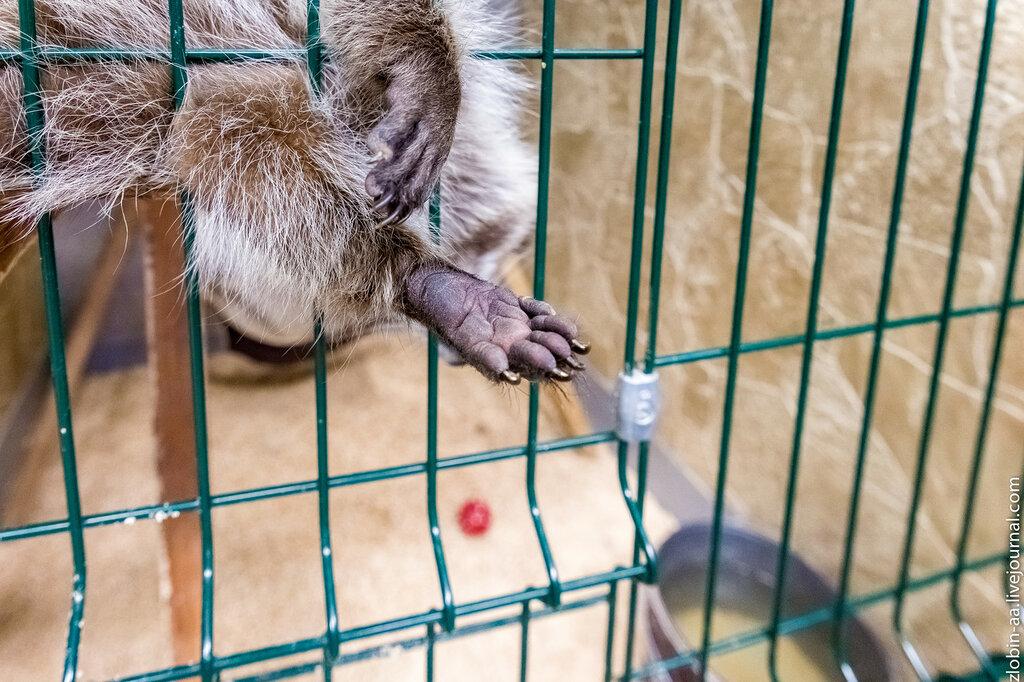 Арбат, 16 - Контактный зоопарк