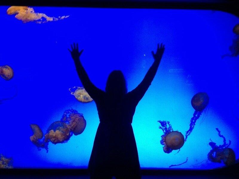 Выставка тысяч медуз в Китае. Красивые фотографии аквариумов