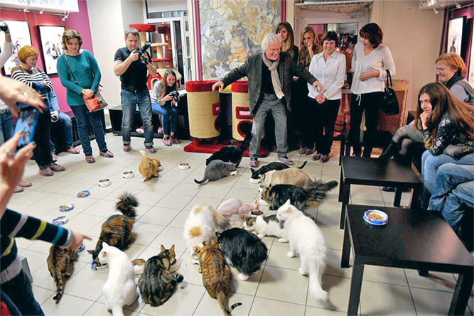 Котобизнес на основе ветеринарных клиник