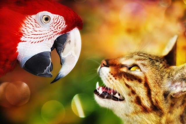 12.Если кошка царапает вас лапами (как на фото ниже), то это значит, что она считает вас своей