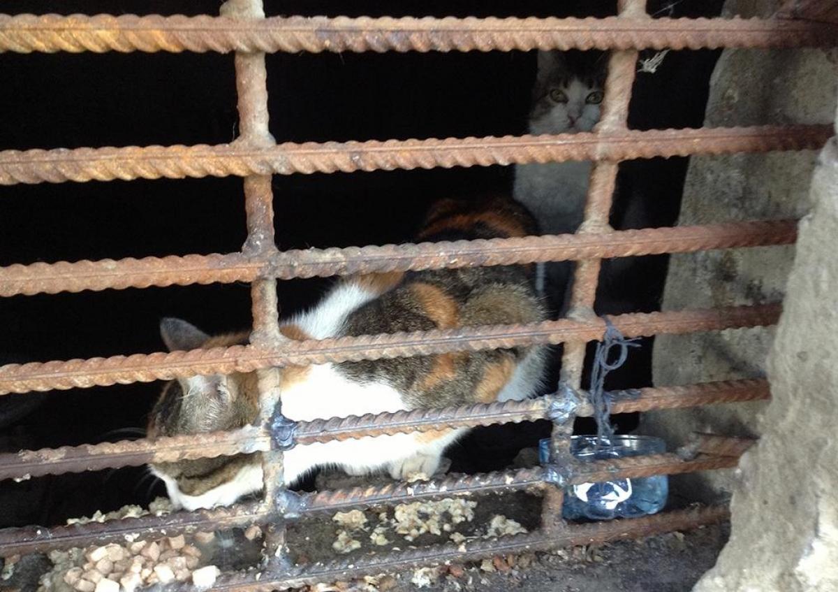 Садо пытки в подвале 7 фотография