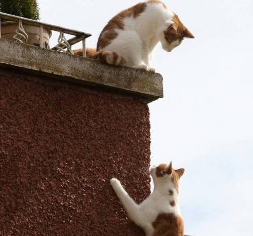 Спайдер - кот