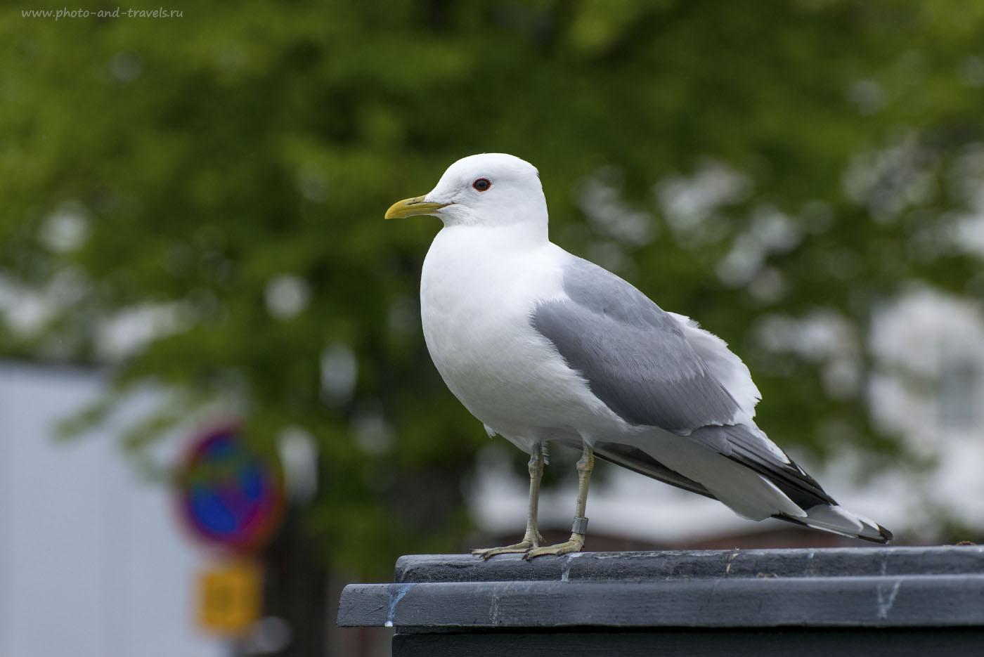 Фото 6. Фотоохота на птиц с зеркалкой Nikon D800 и телеобъективом Nikkor 70-300. 1/250, 0.67, f/8.0, 800, 180 мм.