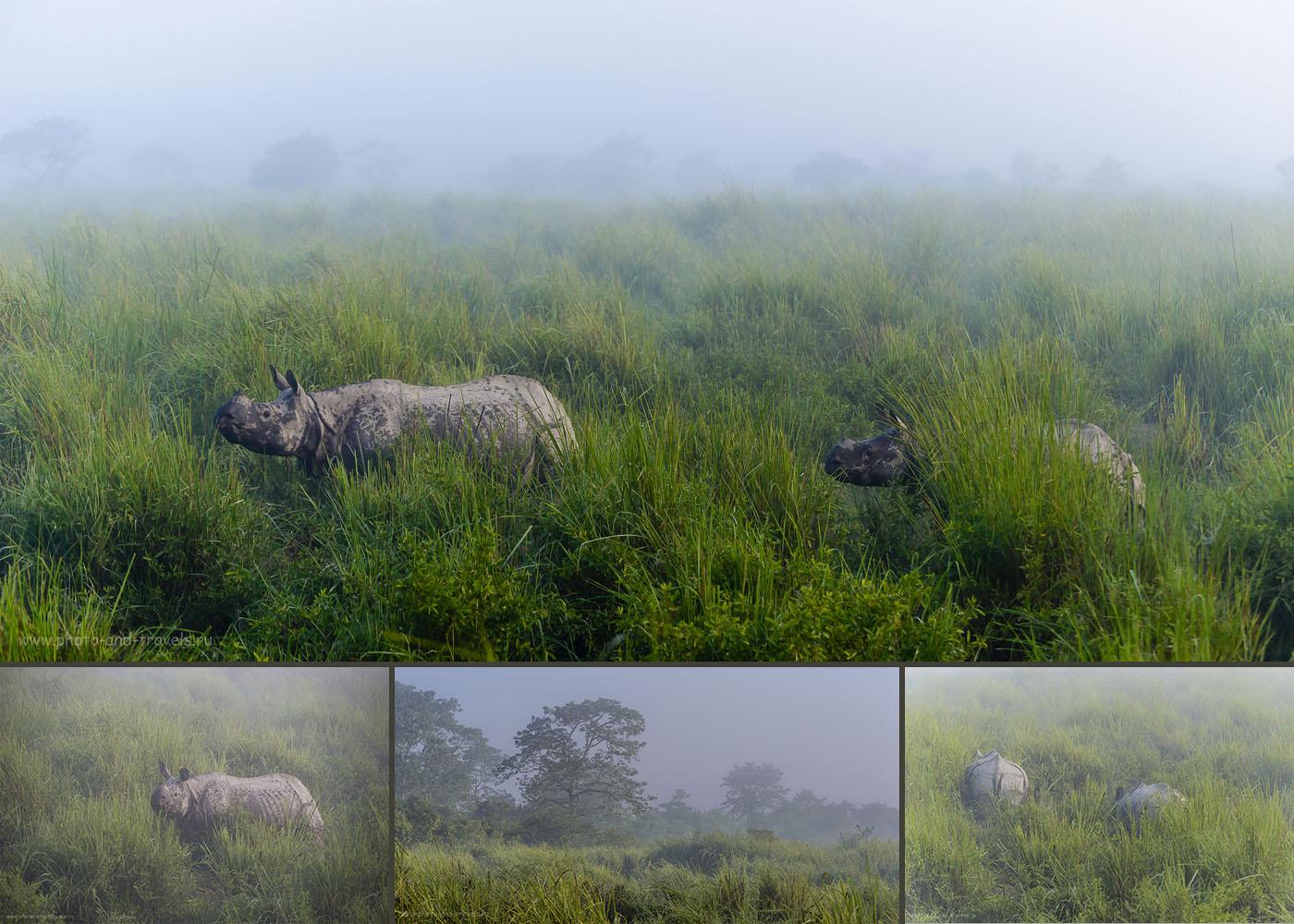 Фото 9. Сафари на носорогов в заповеднике Kaziranga National Park в Индии. Отчеты туристов о самостоятельных экскурсиях.