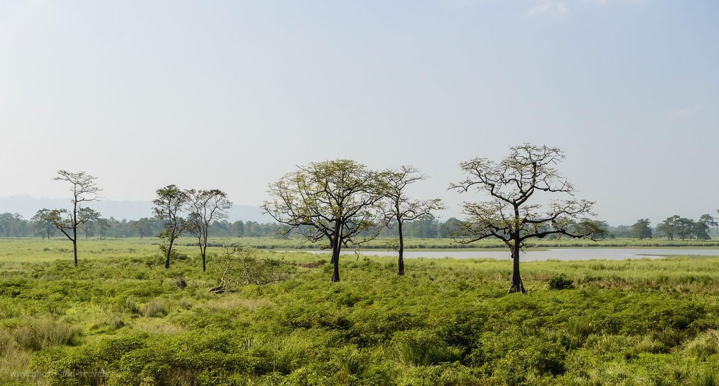 Фотография 28. Ландшафты Kaziranga National Park. Как мы ездили в Индию дикарями. 1/250, -0.33, 8.0, 250, 70