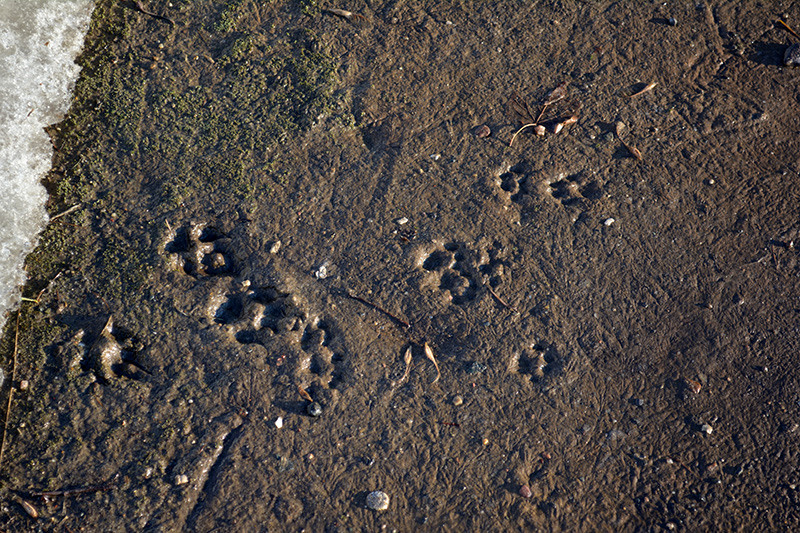следы в грязи