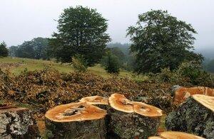 Незаконная вырубка леса в Молдове достигла ужасающих темпов