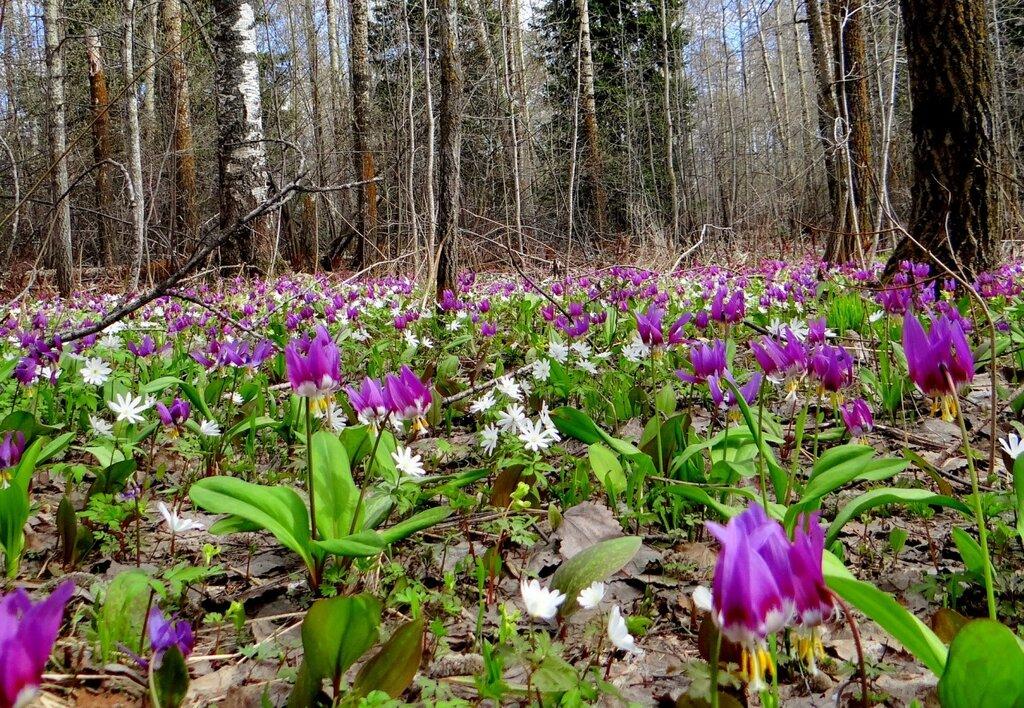 Сказка сибирской весны