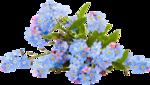 RR_SpringFling_Element (101).png