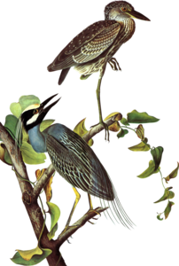 крупные птицы