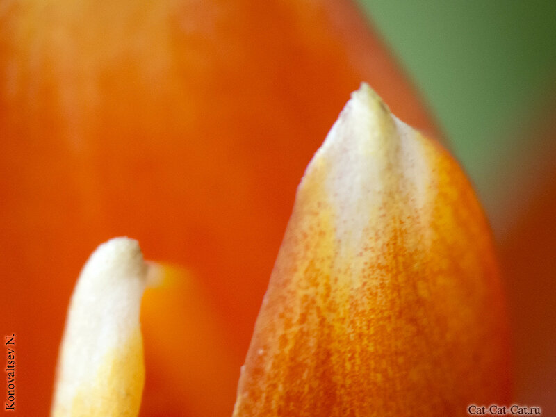 Макросъемка цветов