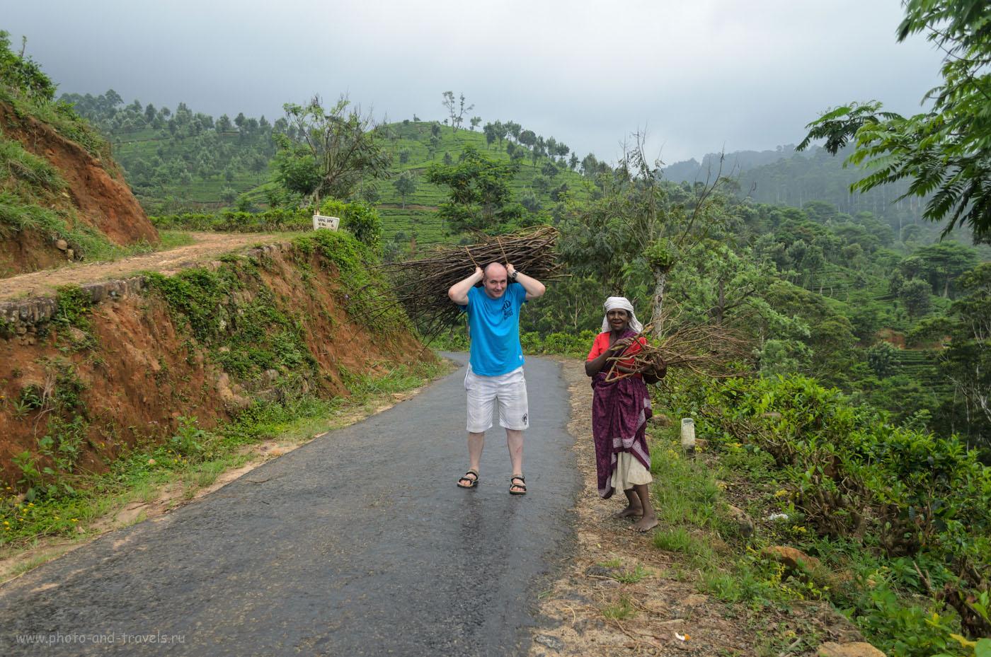 Фотография 12. Туристы на Шри-Ланке вынуждены работать на чайных плантациях и собирать хворост для местных жителей. Отдых на Цейлоне и безопасность.