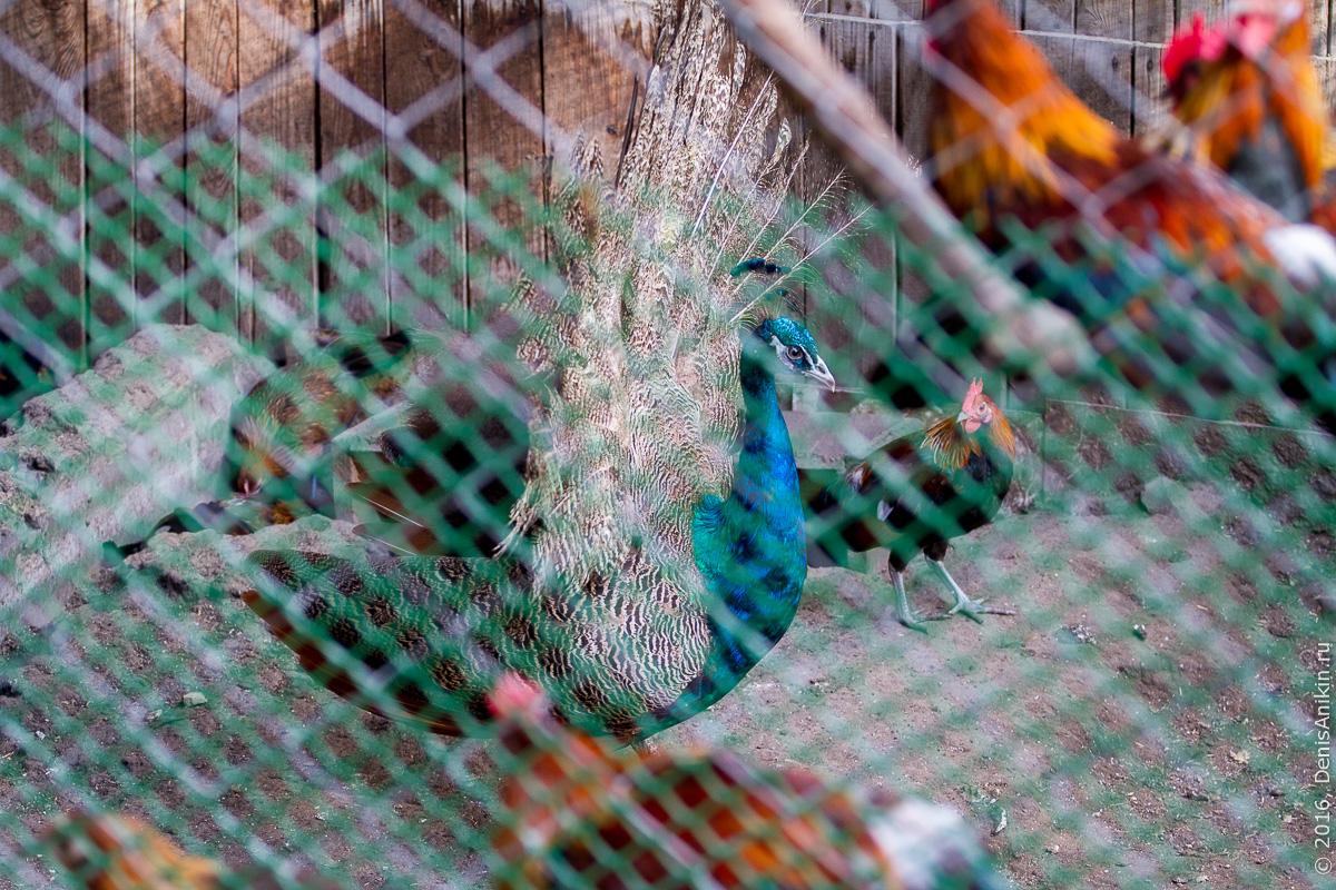 Пензенский зоопарк 14