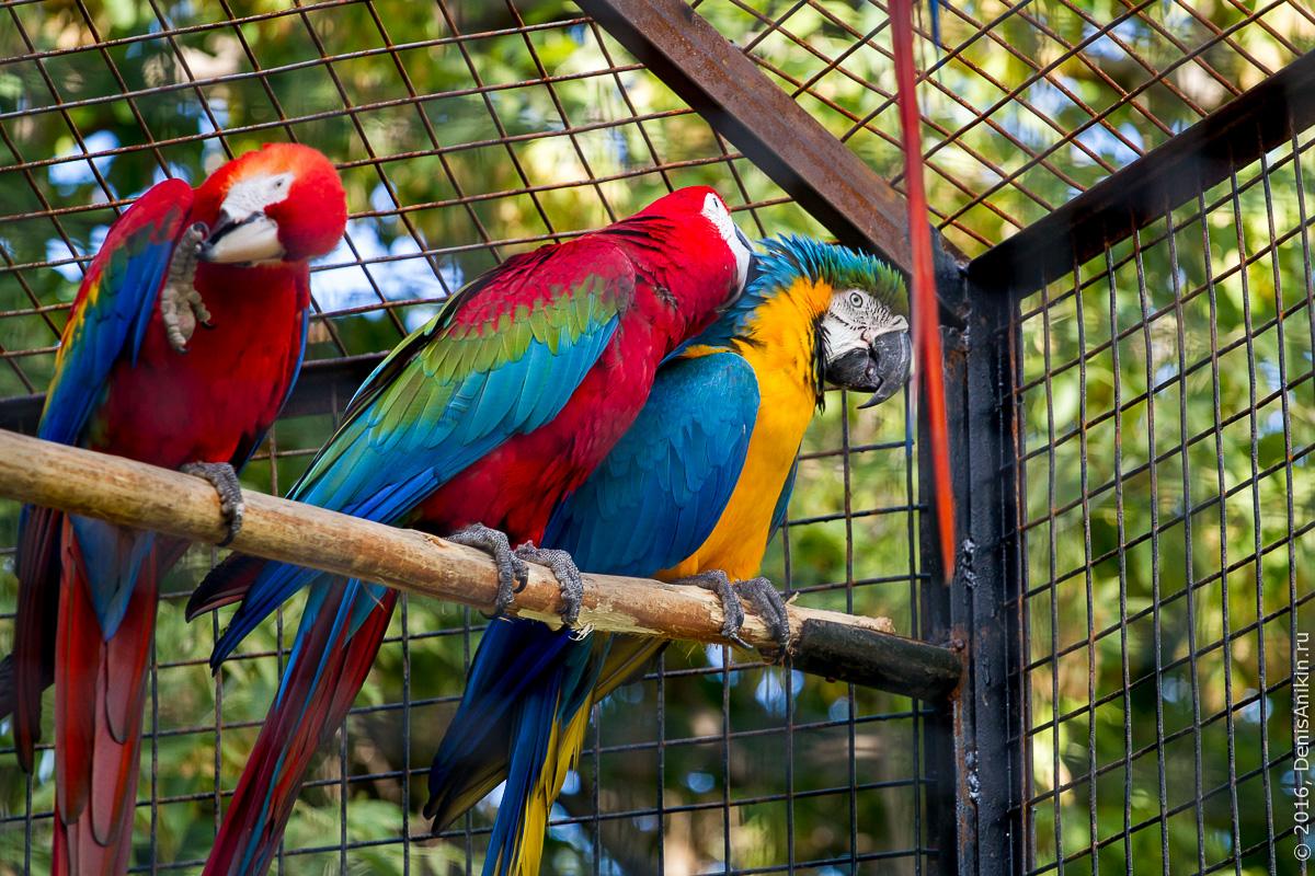 Пензенский зоопарк 21