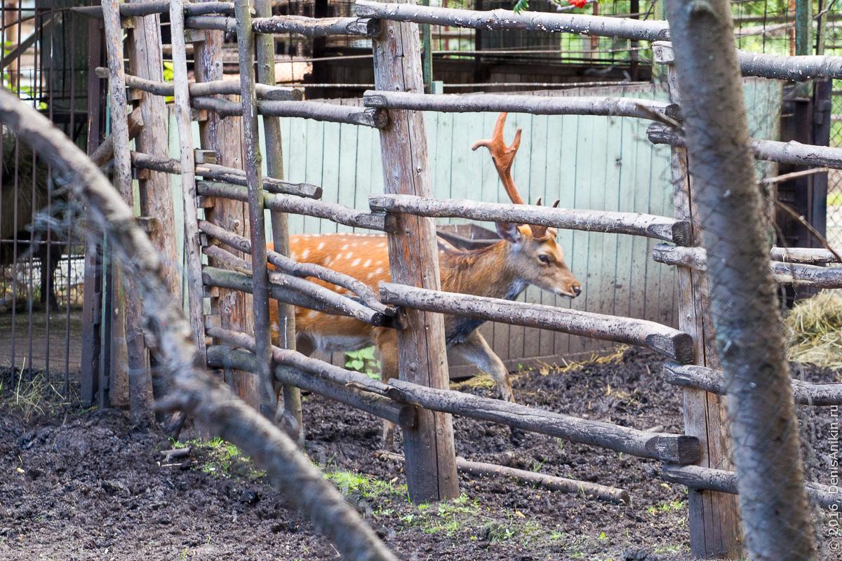 Пензенский зоопарк. Животные 1