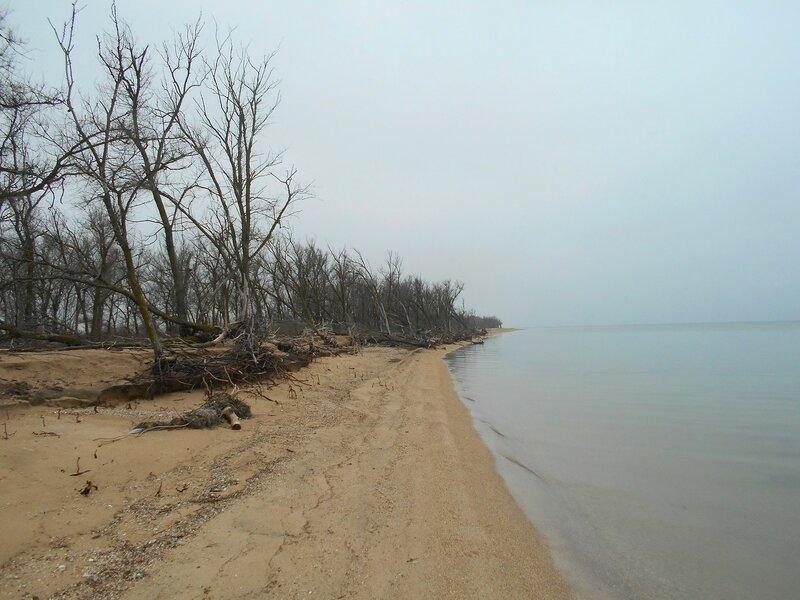 У моря и больших деревьев ... DSCN4242.JPG