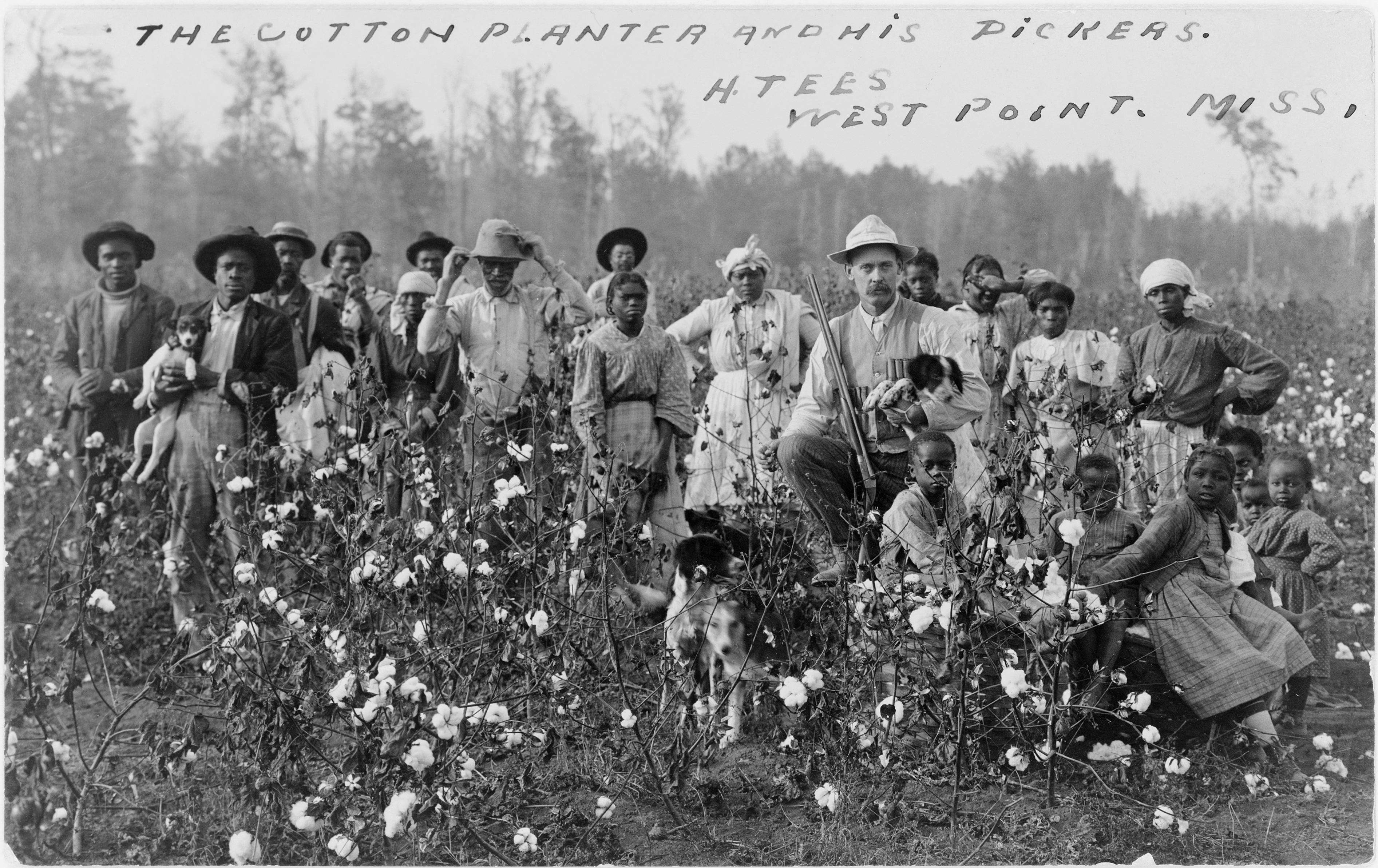 Cotton_planter_and_pickers1908.jpg