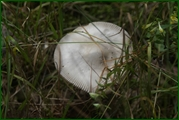 http://img-fotki.yandex.ru/get/43572/15842935.381/0_ead39_e95c2fa9_orig.jpg