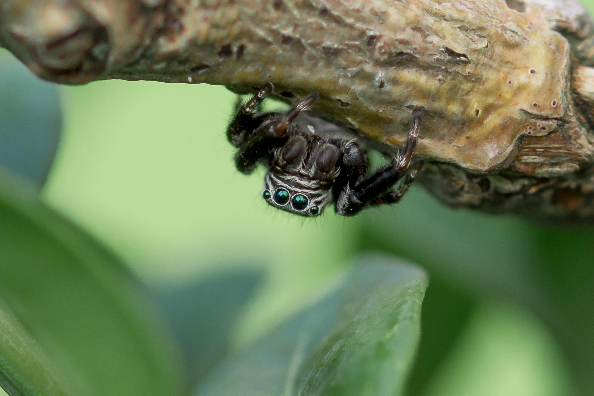 Макро насекомые Alicja Gacka