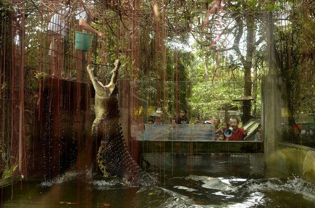 "A worker feeds a crocodile named ""Shaquille"" at an enclosure at the Malabon Zoo in Manila on March 3"